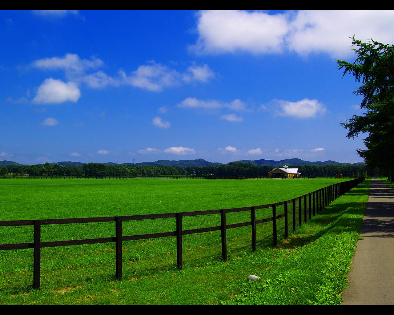 早来の馬と牧場の風景写真 写真に写ってる牧場はすべて社台グループの牧場です.とても広大な牧場です