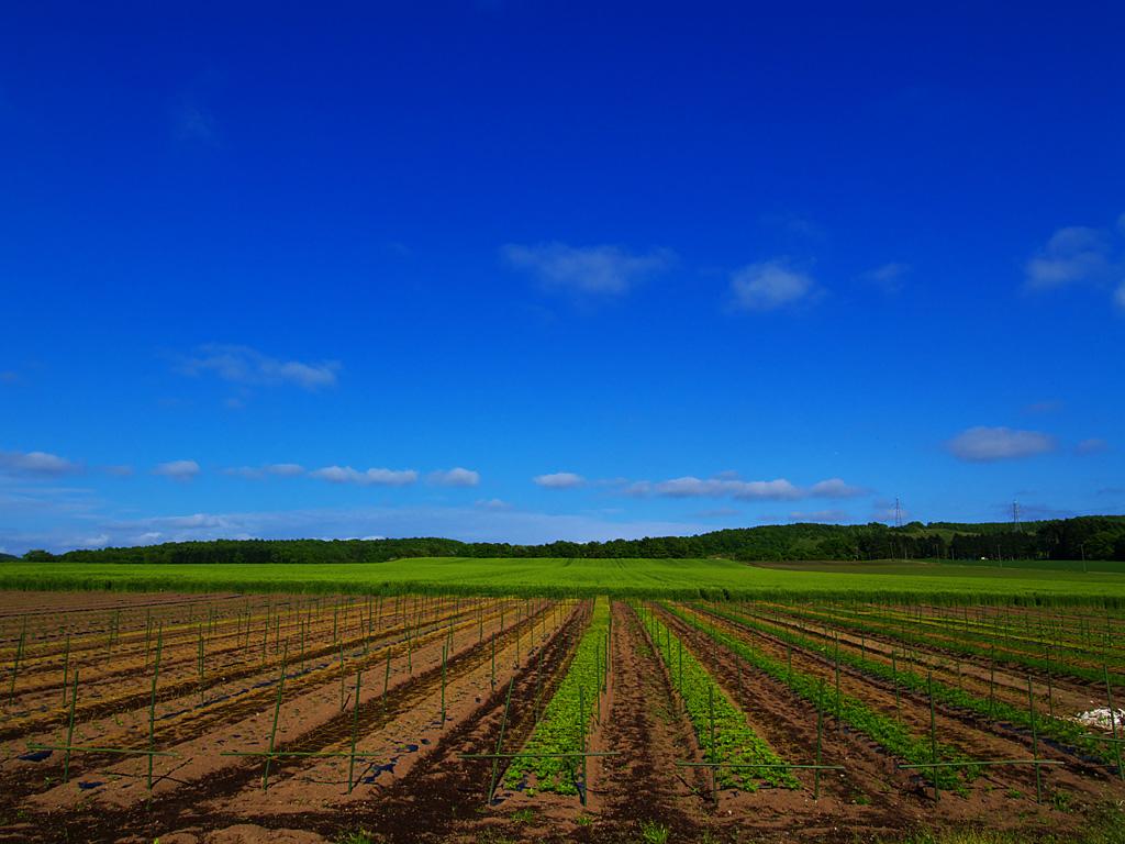 長沼・千歳・パレットの丘の田園風景