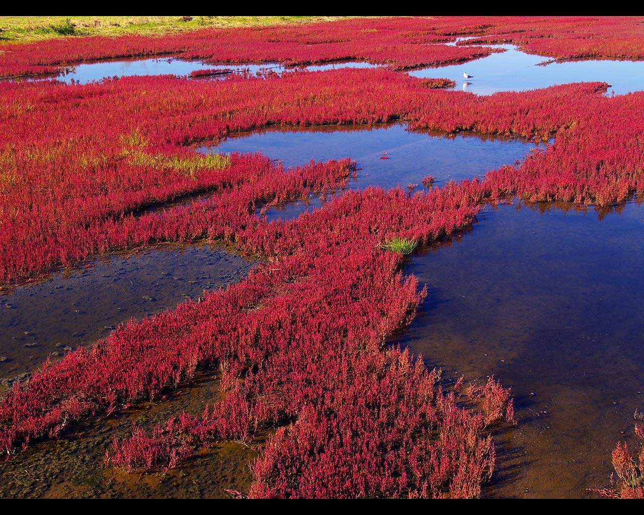 能取湖・珊瑚草の風景